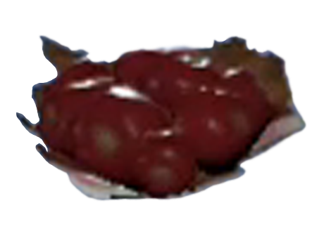firecracker_berry_berries_fallout_76_wiki_guide